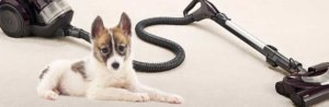 Vacuum Cleaner for Pet Hairs
